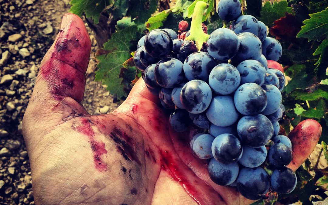 Vignerons de Huesca ofrecerán degustaciones en Palo