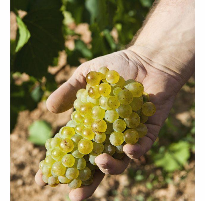 Bodega Pirineos, Enate y Otto Bestué, la excelencia de sus vinos presente en el Festival